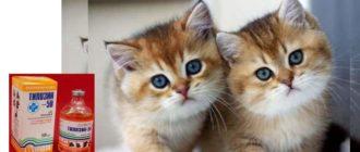 Тилозин для кошек — это антибактериальное средство широкого средства