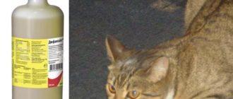 Кошка после родов