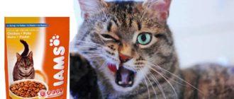 Ямс (IAMS) — корм для кошек без красителей и консервантов