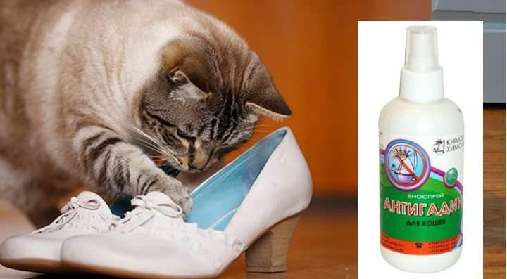 Если кошка гадит в туфли