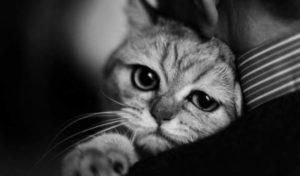 Кошка прощается с хозяином