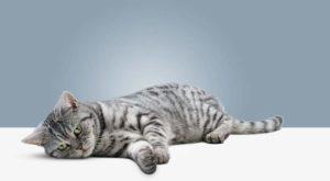 Если ваша кошка больна