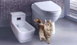 Мини унитаз для вашей кошки
