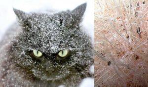 Обновление кожного покрова у кошачьих представителей