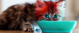 Синяя миска и котенок