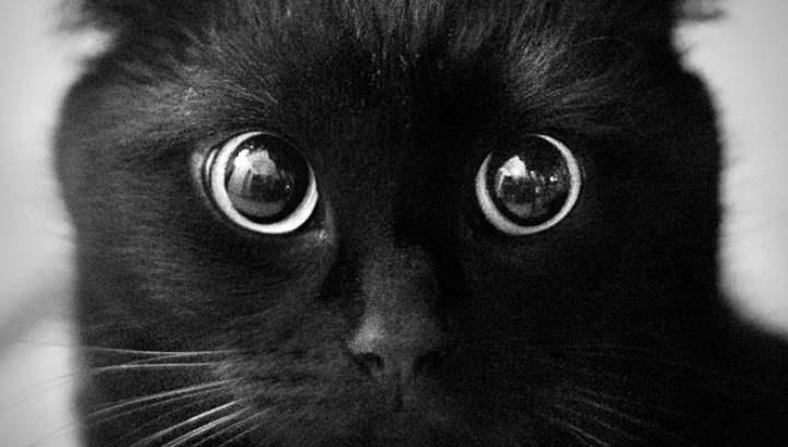 Круглые глаза у черного кота