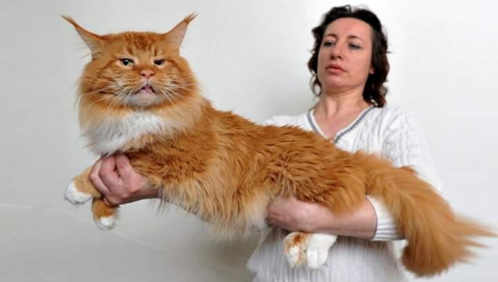 крупное животное с развитой мускулатурой, весом 5-10 кг