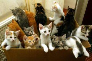 Котята в коробке