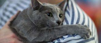 Кошка обняла хозяина