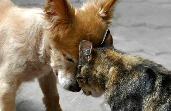 Пес против кота