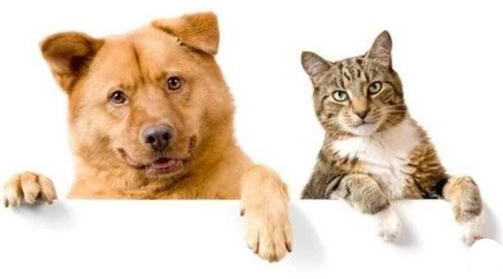 Рыжий пес и дворовой кот