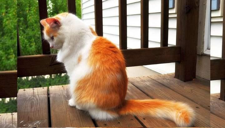 Название озера в Турции дало имя породе кошек - турецкий ван, берущей свое начало в Средние века