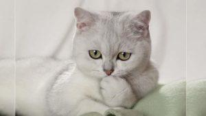 Забавное фото кошки
