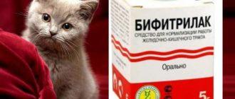 Лечение поноса у котят