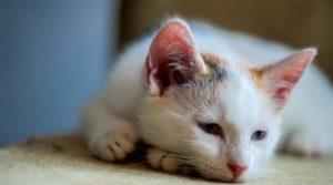 Когда у кошки глисты