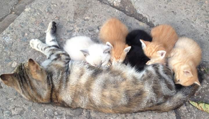 Разные котята и кошка