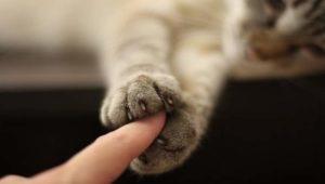 Кот прощается