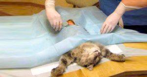 На операционном столе