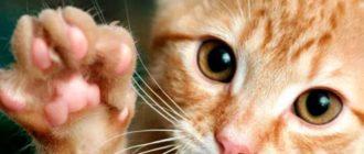 Рыжик котенок и его когти
