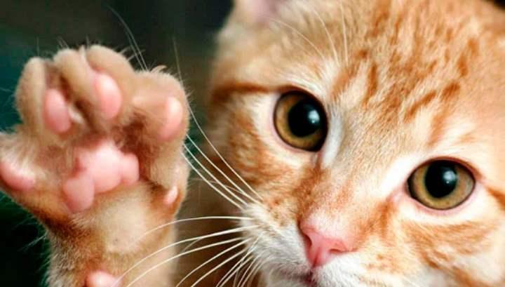 Кот без когтей операция по удалению и альтернативные варианты