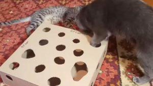Кот ловит шарик
