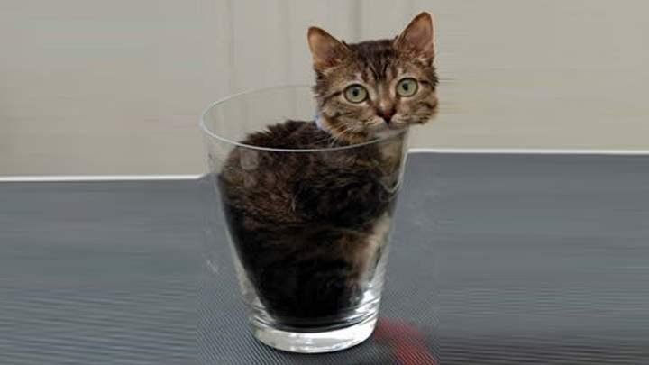 Кот, помещающийся в стакане – мистер Пибблз