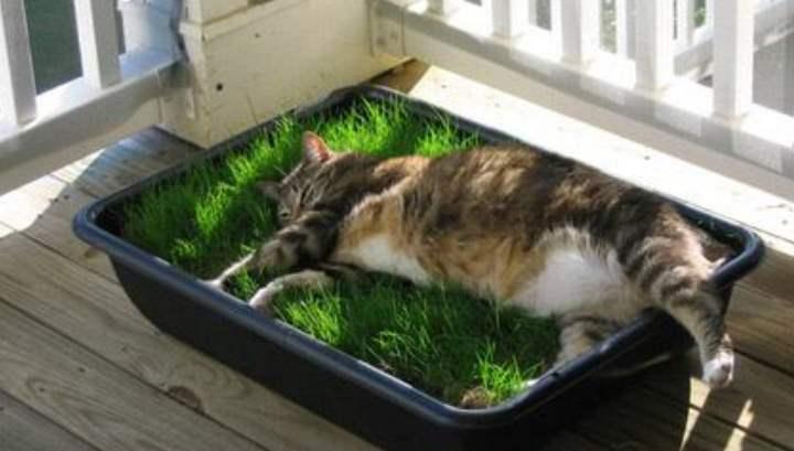 Большой лоток травы