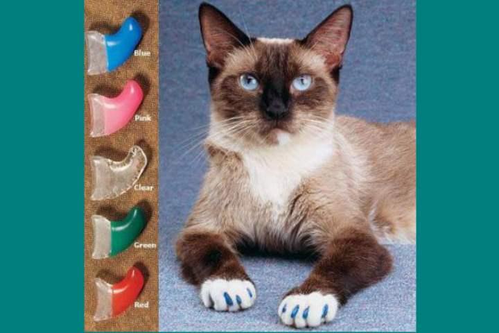 Набор защиты на когти кошки