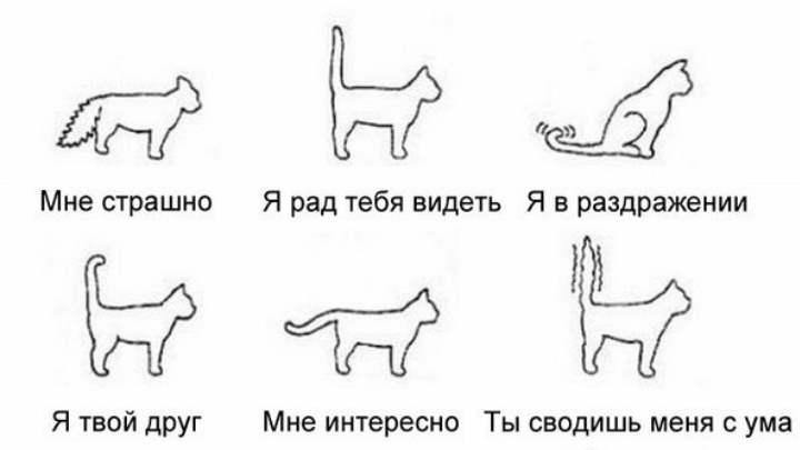 Схема кошачьего поведения