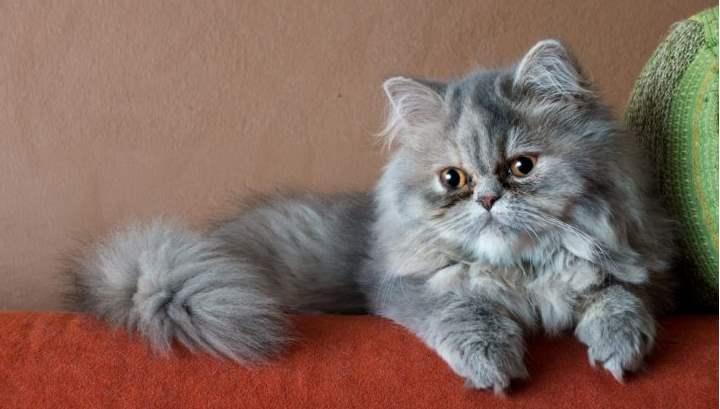 Отрешенный кот