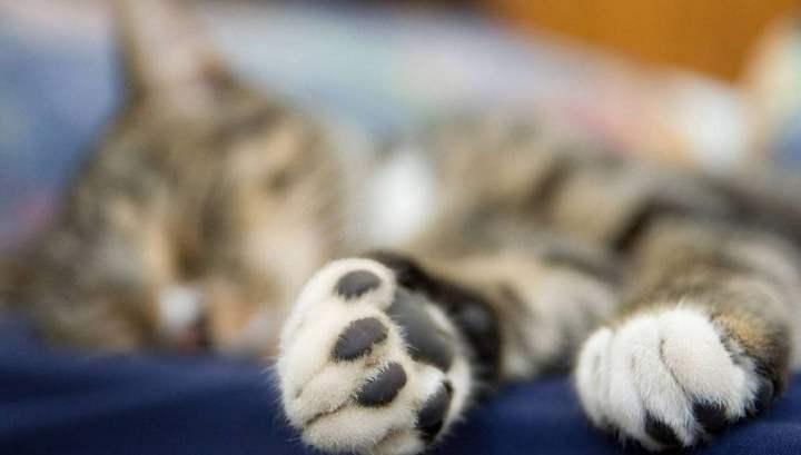 Лапы спящего кота