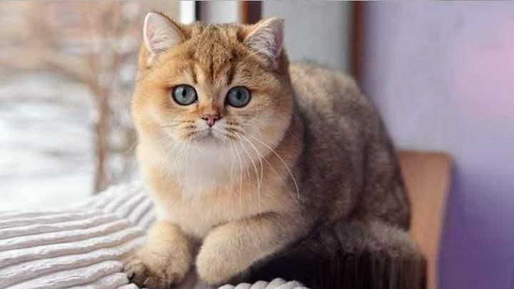 Кошка задумалась