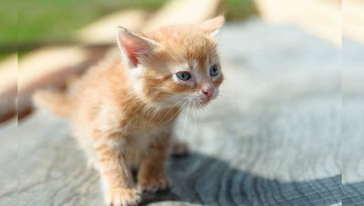 Уличного котенка подобрали