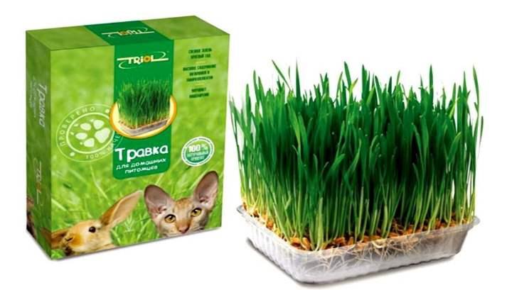 Выращенная трава