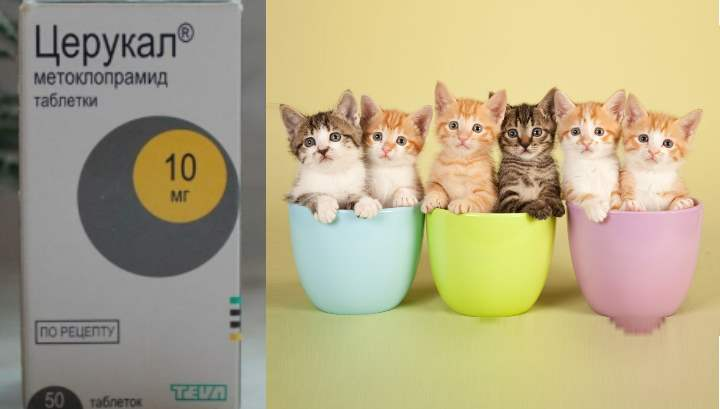 Церукал для кошек и собак инструкция по применению церукала в ветеринарии состав лекарства дозировка отзывы