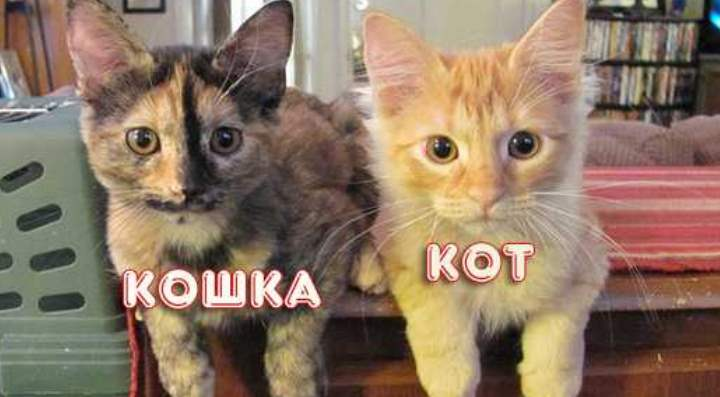 Котята 4 месяца