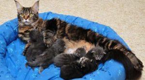 Полосатая кошка с котятами