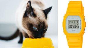 Сиамская кошка ест из желтой миски