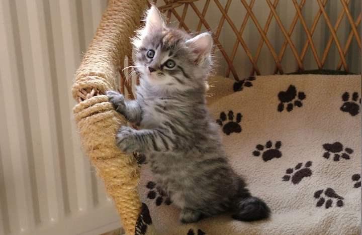Воспитание котенка лаской