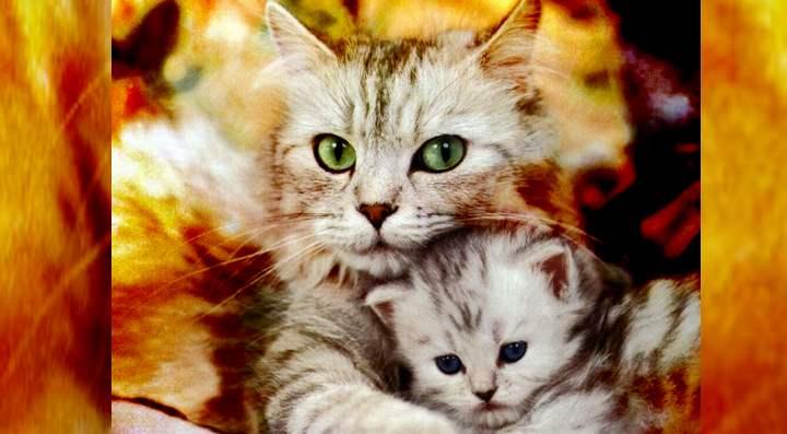 Кошка с младенцем