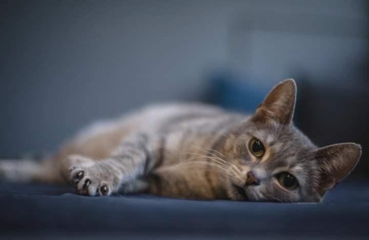 Кот может умереть