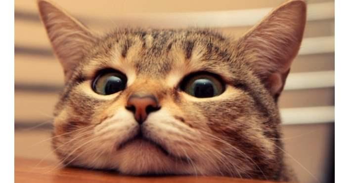Почему специалисты рекомендуют кастрировать кота? Стоит или нет? Советы  Видео