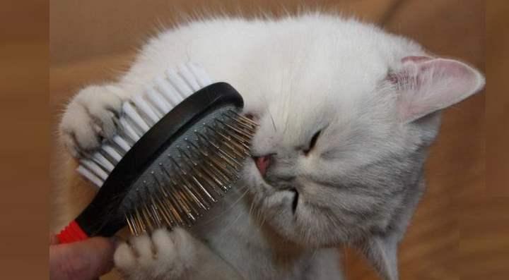 Вычесывание шерсти