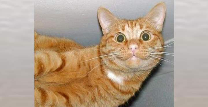 Рыжий кот с глупым видом