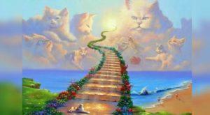 Рисунок о рае для котов