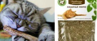 Опилки с мятой для кота