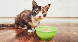 Кот ест суп