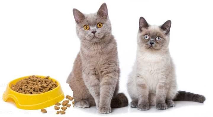 Кто на фото: кот или кошка?
