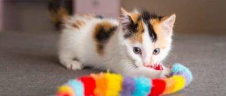 Воспитание котенка игрой