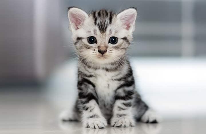 Воспитание котенка